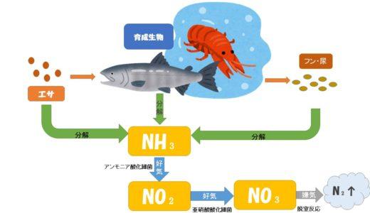☆水質管理☆窒素循環について(アンモニア→亜硝酸→硝酸)