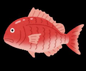 マダイ_22世紀鯛