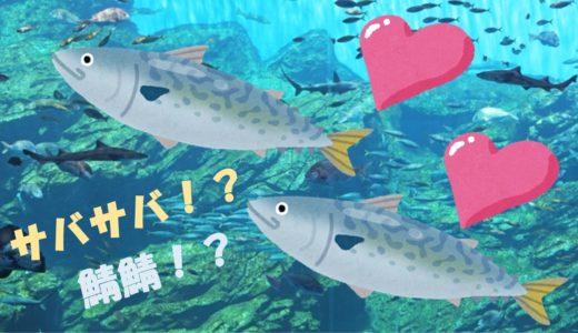 「遠洋漁業」の恋愛ソング!?「鯖鯖」ってなんだ??