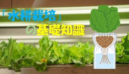 「水耕栽培」とは?水耕栽培キットを自作するための基礎知識