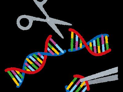 「ゲノム編集」とは?遺伝子組み換えとはどう違うのか?