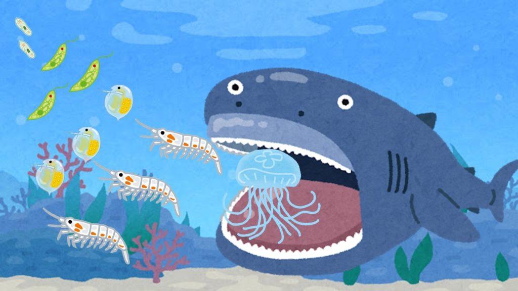 「プランクトン」とは?「微生物」とは何が違うのか?