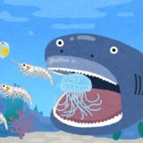 プランクトン循環