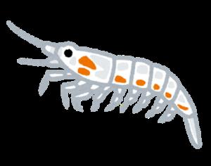 甲殻類プランクトン