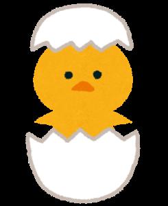 ひよこ孵化